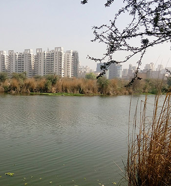 pond-rejuvenation-sarawatikunj-02-col